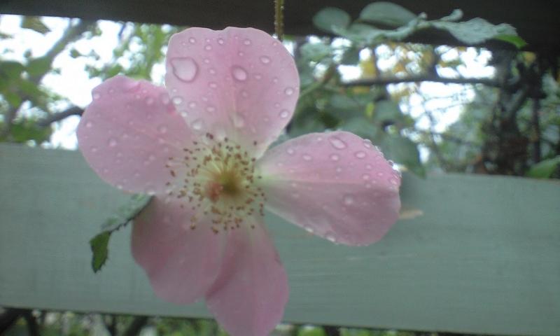 roselesson_b0089559_10215782.jpg