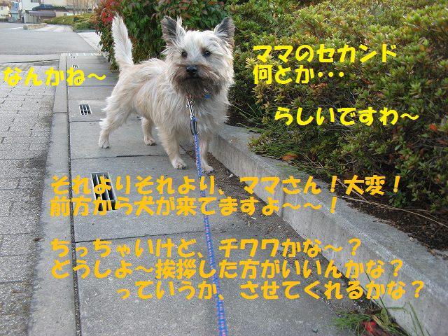 c0202659_13224974.jpg