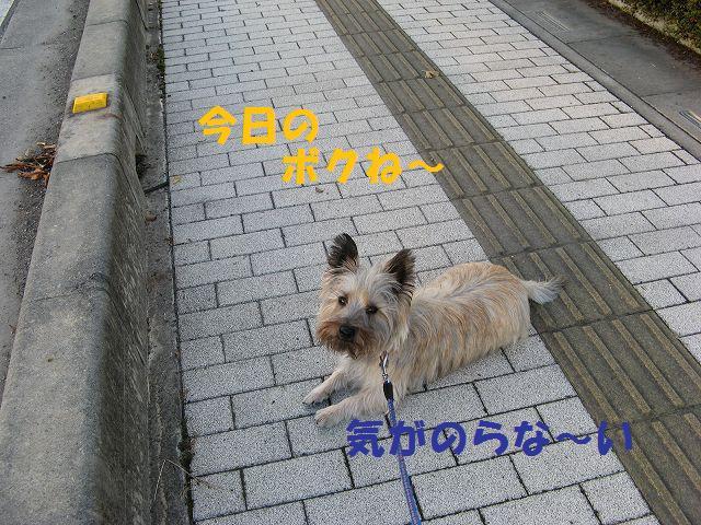 c0202659_13495029.jpg