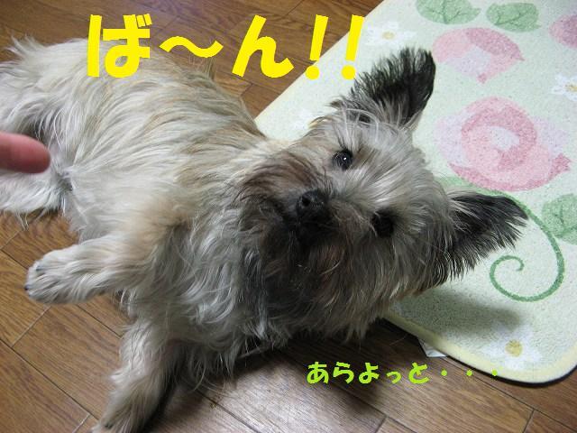 c0202659_17255.jpg