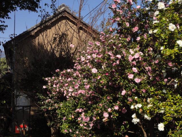 庭の紅葉 第一弾_b0124462_11194786.jpg