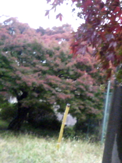 雨で寒いですね~_a0088668_1748011.jpg