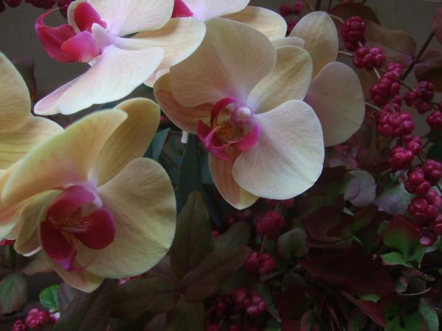 オークリーフ(赤い紫陽花と胡蝶蘭のアレンジメント)_f0049672_13271186.jpg
