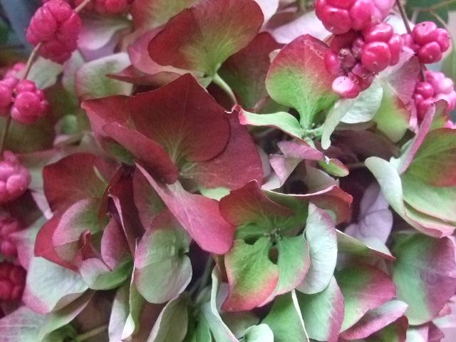 オークリーフ(赤い紫陽花と胡蝶蘭のアレンジメント)_f0049672_13271946.jpg