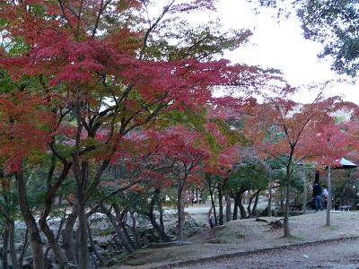 奈良公園の紅葉_b0008289_21524680.jpg