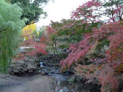 奈良公園の紅葉_b0008289_2152583.jpg