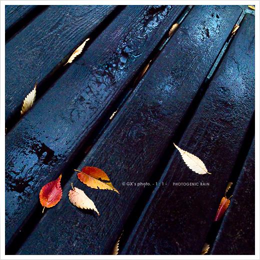 冷たい、雨・・・_e0117517_16563636.jpg