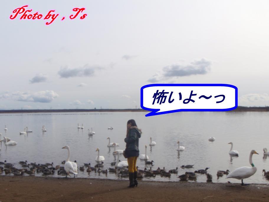 f0147821_1458164.jpg