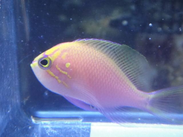 海水魚_f0189122_1391340.jpg