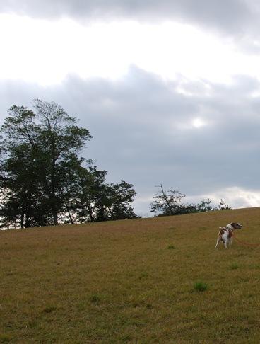 犬と紅葉 in KYOTO_c0099133_0152341.jpg