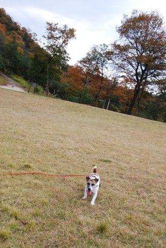 犬と紅葉 in KYOTO_c0099133_0173288.jpg