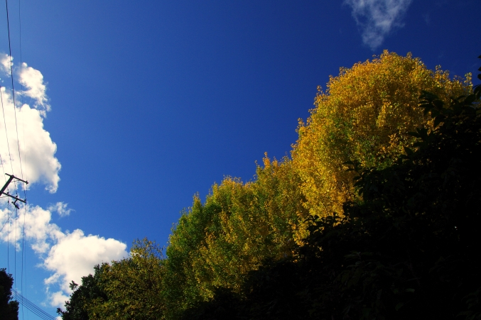 そうだ 京都、行こう。 ~憧れの吉田山 'レストラン ラ・トゥール'~_d0145934_803976.jpg