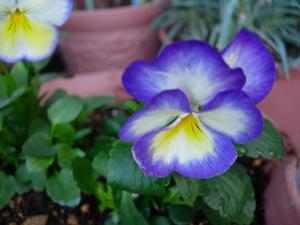 秋から冬へと庭も衣替え_e0097534_14151190.jpg