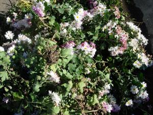 秋から冬へと庭も衣替え_e0097534_1461597.jpg