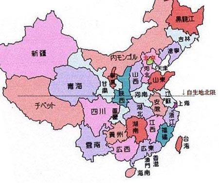 中国春蘭中透け                     No.734_d0103457_11293841.jpg