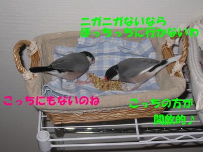 b0158061_218188.jpg