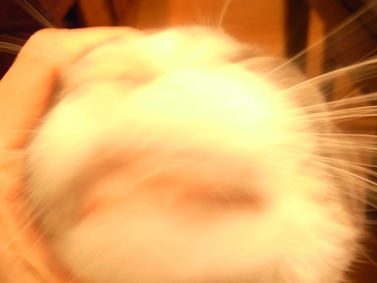 猫アレルギー_e0061902_8495346.jpg