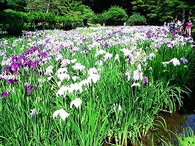 田園の景  (小石川後楽園 ⑤  江戸の庭園)_c0187004_23552628.jpg