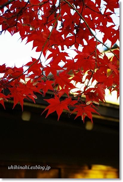 昭和記念公園 輝く紅葉_f0179404_214968.jpg