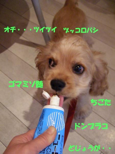 b0067012_033757.jpg