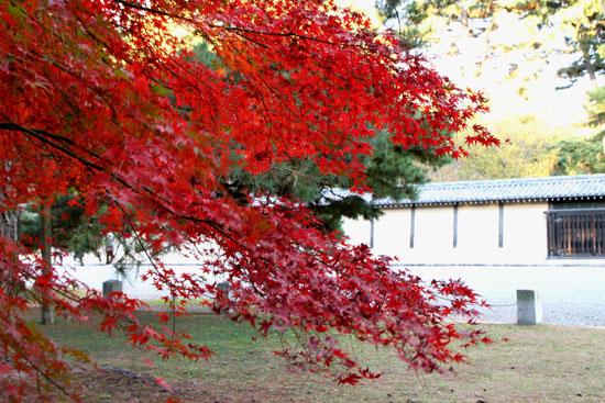 京都御所_e0048413_2213352.jpg