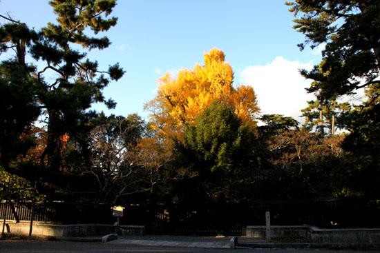 京都御所_e0048413_2215140.jpg