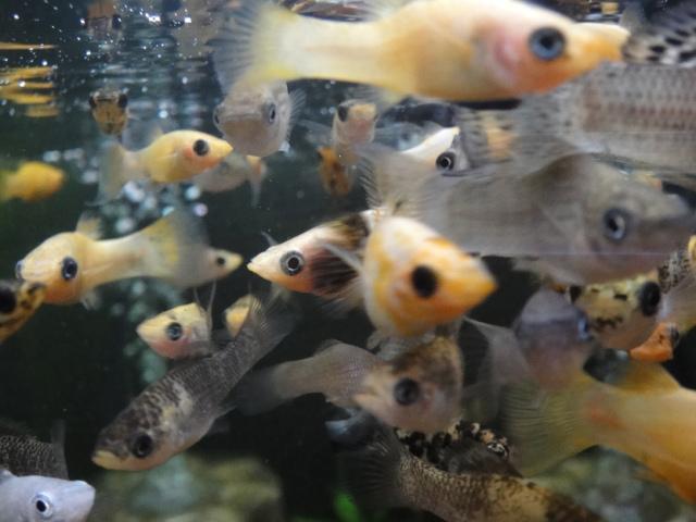 熱帯魚・水草_f0189122_12593914.jpg