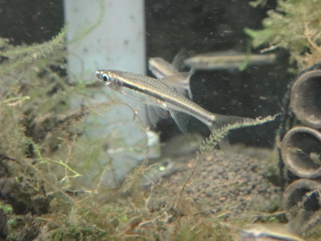 熱帯魚・水草_f0189122_1811381.jpg