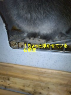 b0169631_12324279.jpg