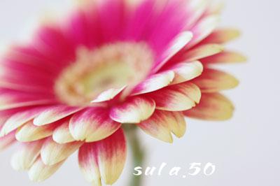 f0182531_227062.jpg