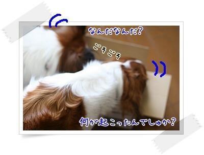 d0013149_037442.jpg