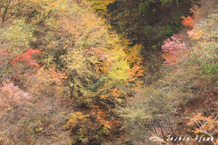 カラフル秋色(奥多摩)_c0181958_0573559.jpg