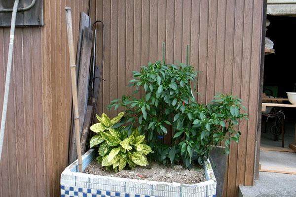 風呂畑1119_a0083760_21402812.jpg