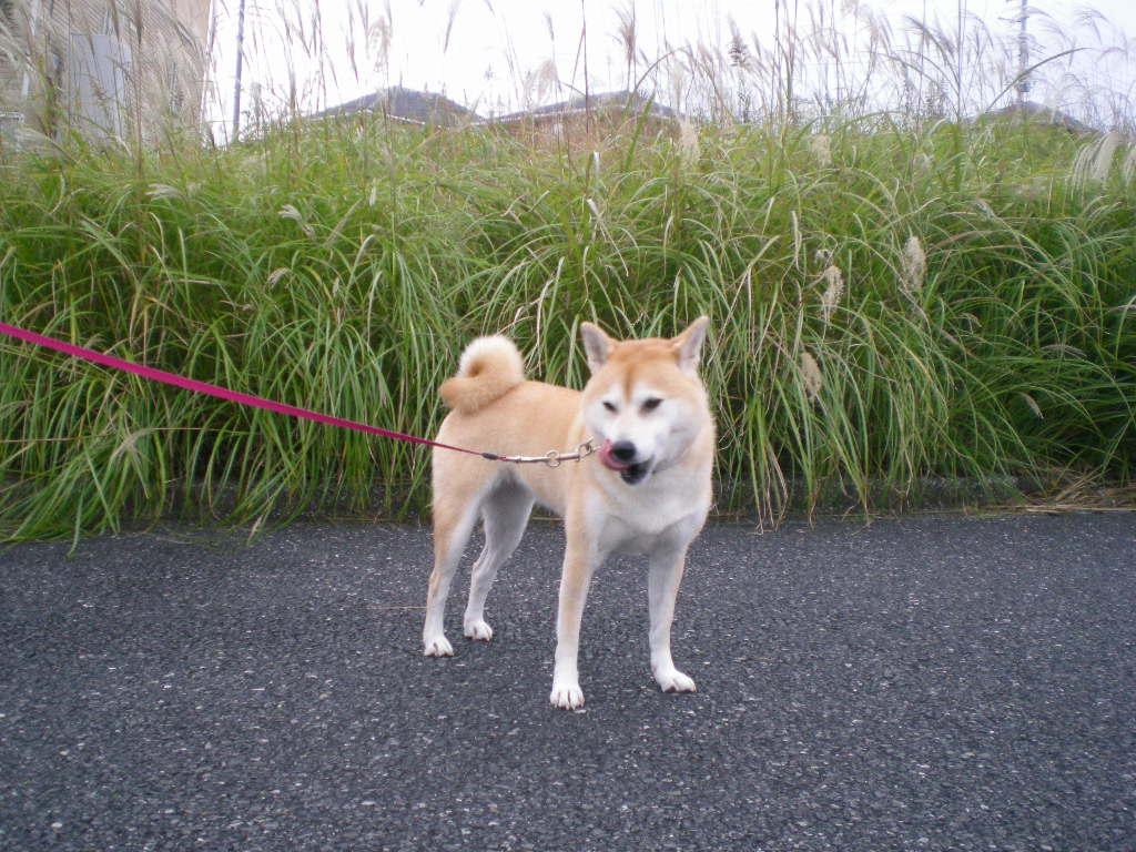 2009年11月19日(木)大好き!!!_f0060461_125528.jpg