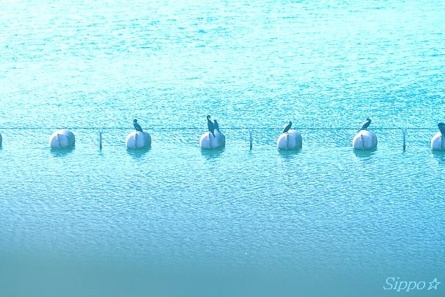 ■■On the water■■_c0195662_0335786.jpg
