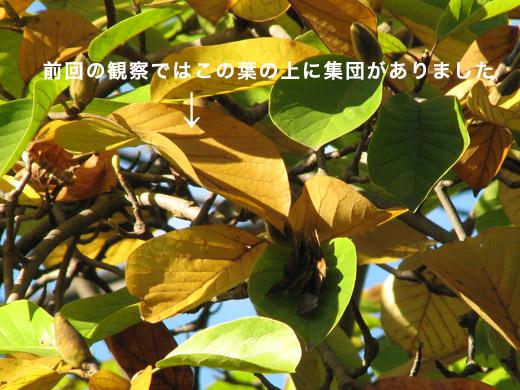b0145383_1621744.jpg