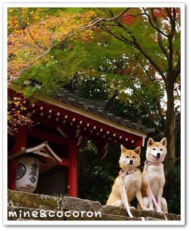 金蔵寺_a0053987_2314436.jpg