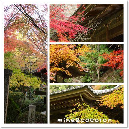 金蔵寺_a0053987_23163348.jpg
