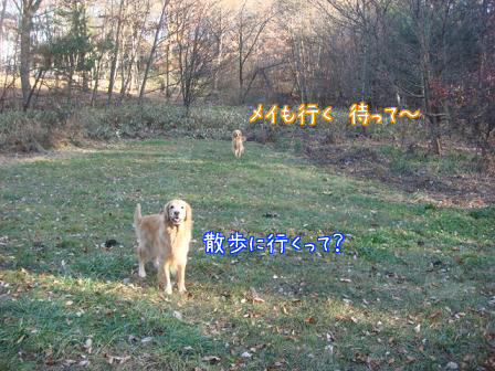 f0064906_18263620.jpg