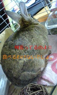 クリスマスのそりが消えたヨ_c0225410_19165378.jpg