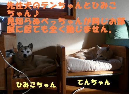 f0121712_2319237.jpg