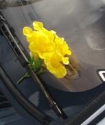花をありがとう!_a0043520_23141168.jpg