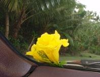 花をありがとう!_a0043520_23171925.jpg
