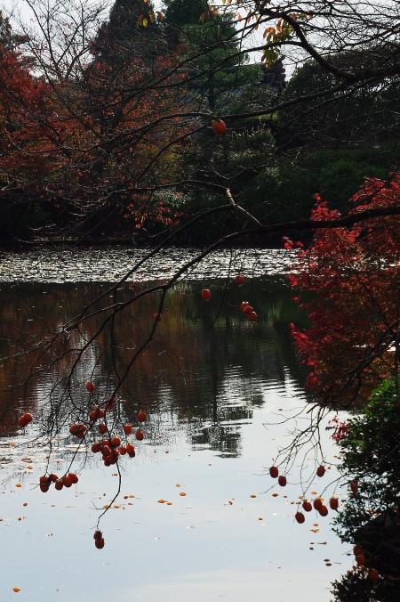 そうだ 京都、行こう。 ~ 「吾唯足知」 ZENの空間、龍安寺~_d0145934_754059.jpg