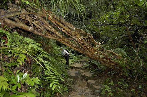 西表島の自然・歴史・文化⑤_c0180460_3285335.jpg