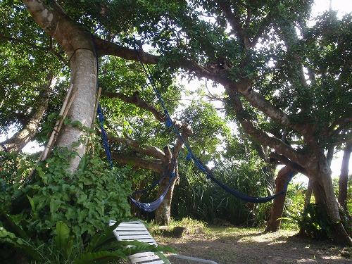 西表島の自然・歴史・文化⑤_c0180460_3303571.jpg