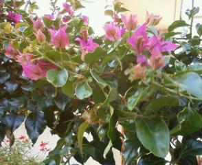 朝の庭にて_b0011075_18585965.jpg