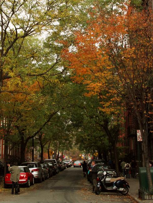 ニューヨークの紅葉、住宅街も美しいです_b0007805_22484475.jpg