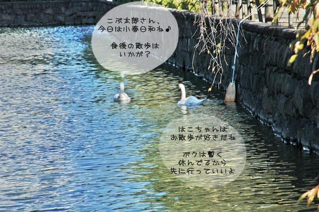 皇居東御苑_f0012718_2312645.jpg