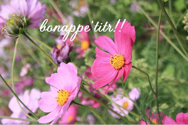 秋桜畑を楽しむ。_c0127029_1656065.jpg